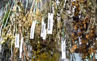 Herbs That Can Help Anxiety